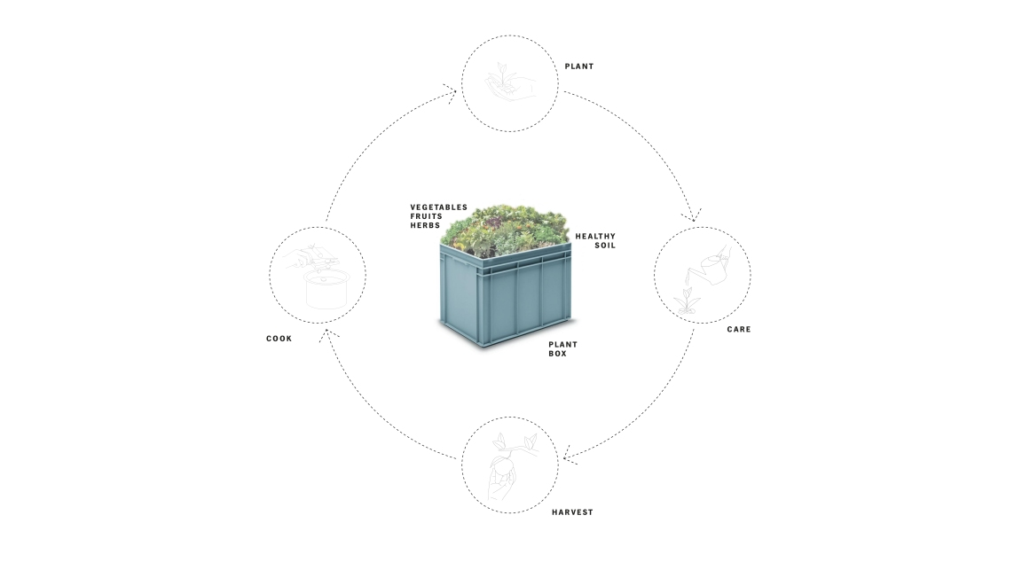 Sembrando Vida - Box.jpg